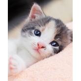 Deka mikroflanel s digitálním tiskem Kitten 120/150